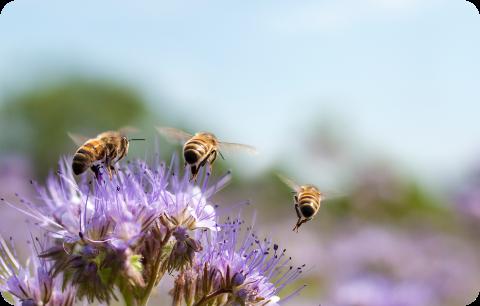 Geprikt, gebeten of gestoken? Eerste hulp bij insectenbeten en -steken